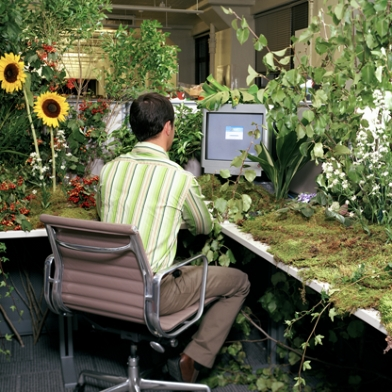 plant covered cubicle